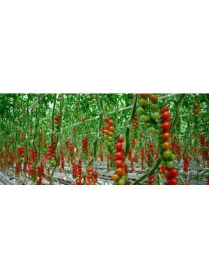 Óleo de Neem Nim Agro Naturalneem Agrícola Composto Galão de 5 L